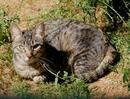 Cyntia ist sehr sozial mit anderen Katzen, aber noch schüchtern
