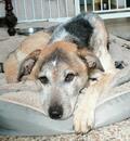 NÖ: Hübscher Hundebub YAMO sucht seine Familie!