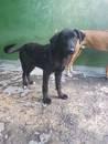 MATTEO - ein Hundekind hofft auf Rettung !