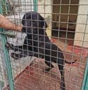 Doggen-Labrador-Mix ALONSO hofft auf Rettung
