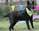 Wundervoller Familienhund TALTOS sehnt sich nach seinem Glück!