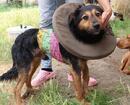Vom Schicksal gebeutelter Traumhund POMPEY sucht das Glück!