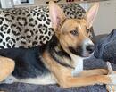MATO - ein Herzenshund möchte endlich sein großes Glück finden!