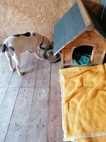 Mischlinge: DINO wünscht sich ein Zuhause!
