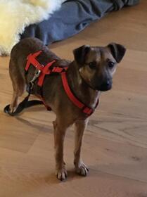 Hundewelpen: Der verschmuste Curt wartet auf einer Ps in 41063 Mönchengladbach