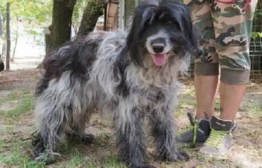 Mischlinge: NERO, geb.05/2011, verträglicher Hundesenior bittet um seinen Pla