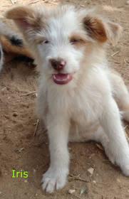 Hundewelpen: 5 süsse Hundewelpen!
