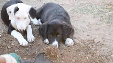 Mischlinge: Lea, Mischlingshündin ca. 5 Monate