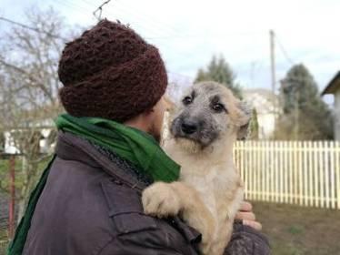 Mischlinge: Banshee Mischling Rüde 4 Monate Ungarn