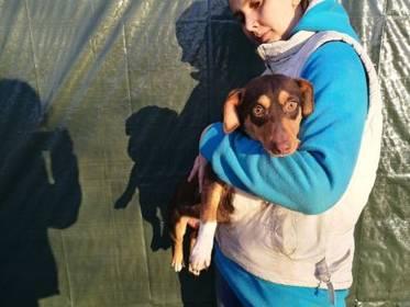 Mischlinge: Balint Mischling Rüde 6 Monate Ungarn