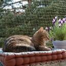 Katzenschutznetz mit Drahtverstärkung - 2 x 3 m