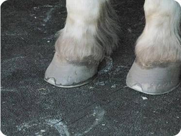 Pferdezubehör: Liegematten für Pferde