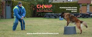Hundefutter: CHAMP Dogfood