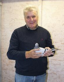 Tauben: Brieftauben aus leistungsgeprüftem Zuchtschlag