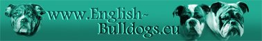 www.english-bulldogs.eu