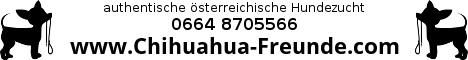 www.chihuahua-freunde.com